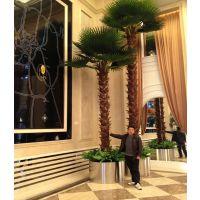 精品酒店棕榈树 室内大堂装饰椰子树 6米保鲜棕榈风景树 酒店椰子树