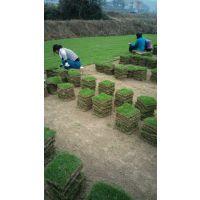 广州草坪多少钱一方