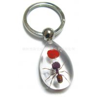 2014热销款 厂家直供 水滴型 透明昆虫红豆琥珀钥匙扣 人造琥珀