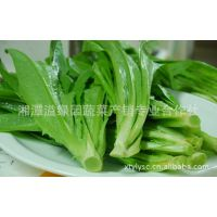湖南农场特供有机蔬菜富硒油麦菜 天然无公害蔬菜 新鲜油麦菜批发