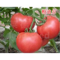 【莱德系列】精品粉果番茄-粉迪尔