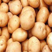 供应优质精选土豆 产地直销 品质保证 绿色农产品 新鲜土豆