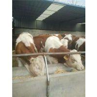 万隆畜牧养殖(图),种牛养殖场,浙江种牛养殖
