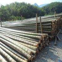 大量供应各种优质楠竹,跳板,菜架竹,竹尾,竹梯,竹扫把,质量保证,欢迎咨询
