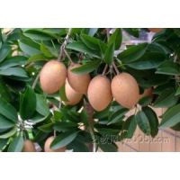 海南水果产地批发一手货源全国招代理一件代发