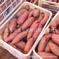 批发新鲜红薯 地瓜番薯 烤地瓜烤红薯 批发 现货 量大从优