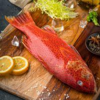深圳鑫融聚 进口印度洋特产印尼东星斑 红石斑鱼 冰冻独立包装 鲜美海鲜批发