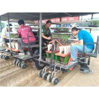移栽机 2ZBX-6型三膜六行多功能秧苗移栽机 大大提高了工作效率减轻劳动力 田耐尔