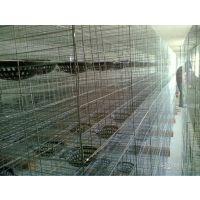 三层12位雄振信鸽笼 养殖鸽子笼 肉鸽笼子 种鸽笼子所有鸽笼现货供应当天可以发货