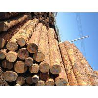 供应满洲里俄罗斯樟松原木