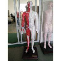 高级电脑人体针灸穴位发光模型