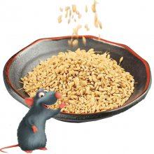 长沙老鼠药批发|老鼠药中毒症状|老鼠药哪里有卖|奥亚灭老鼠杀鼠