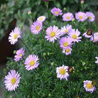 泉州撒播花卉种子龙岩野花组合种子南平专业花卉种子