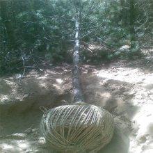 【挖掘起树机价格】不用担心弄脏衣服的链条起树机 润丰有挡泥板
