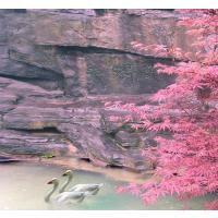春节出去旅游哪个地方比较合适,推荐一下 0851-22613888 习水西南山水旅行社