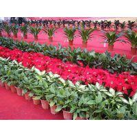 花卉造型设计/郑州风景绿植租赁/公司室内绿化设计