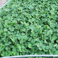 乾纳瑞农业科技在线咨询,石柱法兰地草莓苗,法兰地草莓苗报价