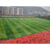 天津足球场人造草皮施工及对人造草皮的保护