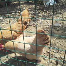 旺来养鸡围栏 散养鸡栅栏 牛羊铁丝围网