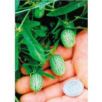 """荷兰进口 超级迷你小西瓜 又名""""拇指西瓜""""种子 带皮吃 瓜长3cm"""