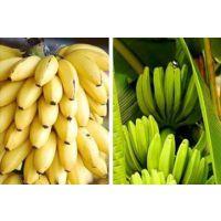 海南热带水果微商,一手货源,长期招收代理