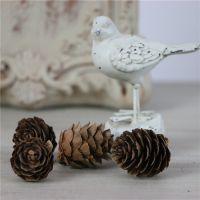 可爱迷你小松果湿地落叶松圣诞松花装饰摄拍照道具森林系饰品材料