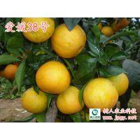 浙江红美人柑橘是四川的爱媛38 吗 湖南树人公司提供优质苗木
