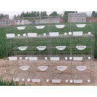 鸽笼制作,镀锌鸽子笼批发,三层组装鸽子笼子,咨询13383380113李