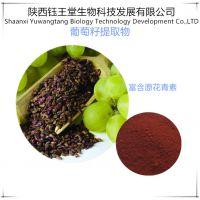抗氧化天然花青素葡萄籽提取物