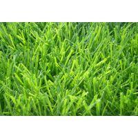 厂家直销足球场人造草坪,双色钻石单丝人造草坪,人工草坪