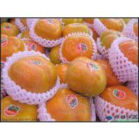 陕西柿子基地柿子产地日本甜柿子批发销售价格