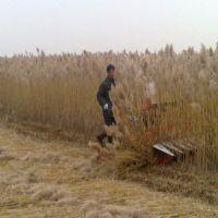 圣通销售120型多功能收割机 性能可靠割晒机 灌木收割机