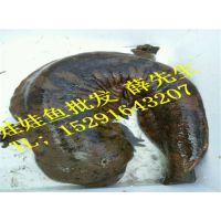 野生娃娃鱼多少钱一斤,娃娃鱼行情价格是多少