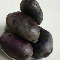 新鲜洋芋蛋 农家自种黑土豆 原产现挖紫土豆 甘肃马铃薯 田园黑金刚