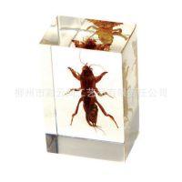 厂家直销大量供应 琥珀饰品 昆虫琥珀书镇/纸镇 特色旅游纪念品