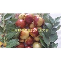 乐陵鲜枣直供大梨枣产地一手货源