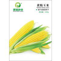 鹏城种业玉米种子黄粘玉米种子 早熟青食玉米种 又甜又糯100g/包
