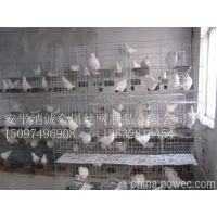 安平纳诚供应养鸽专用笼,种鸽、青年、肉鸽笼价格
