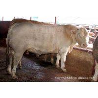 养牛,波尔山羊,小尾寒羊-山东俊发牧业肉牛波尔山羊肉驴养殖场