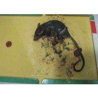 怀柔区灭老鼠_室内灭老鼠_绿巨人消灭老鼠(多图)