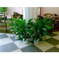 宝安中心区绿色植物盆栽租摆语花香园艺满一年送一个月13590426303