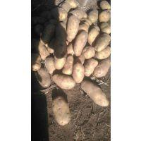 围场冀北农业土豆蔬菜代收133-6388-1918