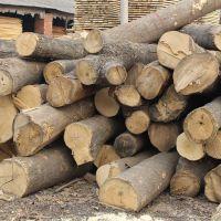 专业生产高档防腐木 防水板材 建筑木方