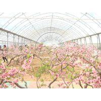 植物园、果树温室大棚造价——青州瀚洋钢结构温室工程
