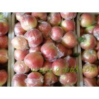 山东省优质美八苹果批发价格