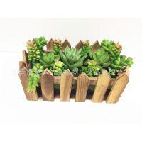 厂家直销 植物墙 花 植物相框 热带植物 仿真多肉植物 装饰美化