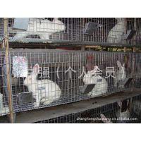 广东聚森丝网制品厂现货销售肉兔笼具 子母兔笼并可定制 量大从优
