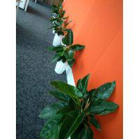 深圳办公室植物租摆,花卉租赁,花木租摆追求服务品质!