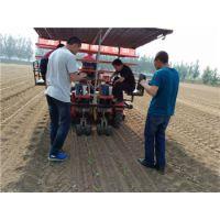 辣椒苗,各种瓜果秧苗移栽机,使用灵活,操作简单,田耐尔多用途移栽机