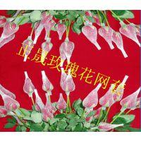 厂家【现货】直销优质化妆刷塑料网套 玫瑰花塑料网套